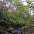 写真: 田代沢の流れる素敵なサイト