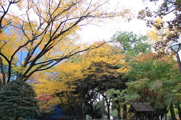 日本庭園(横浜公園2018年12月2日)