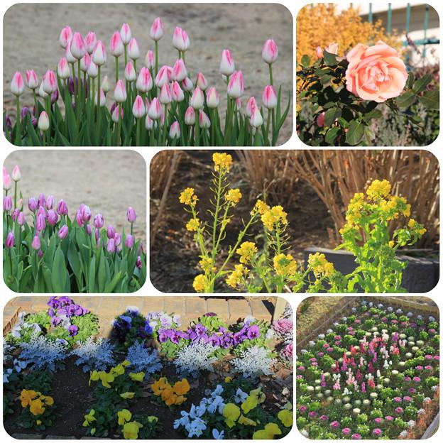 いろいろなお花が咲いてたよ