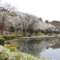 花いっぱい(烏ヶ森公園2019年4月14日)
