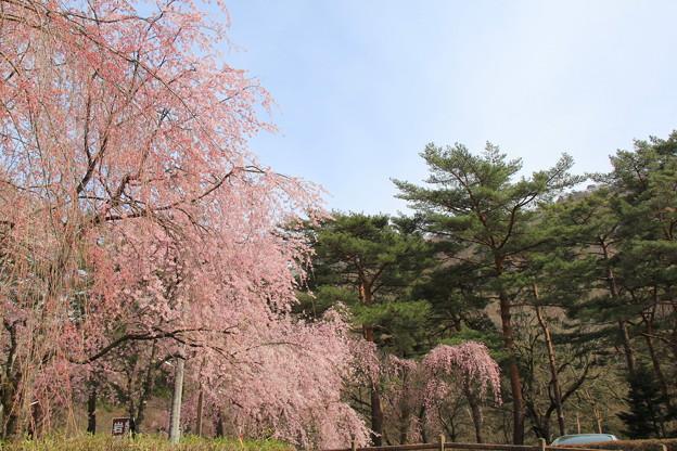 鬼怒川公園(2019年4月14日)
