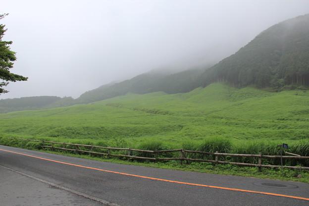 ススキ草原