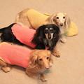 Photos: ママの手編み可愛いでしょ