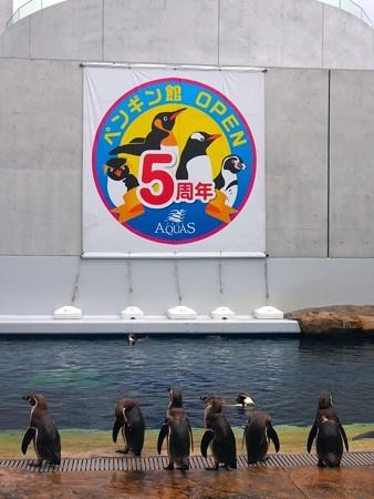 20140429 アクアス ペンギン館05
