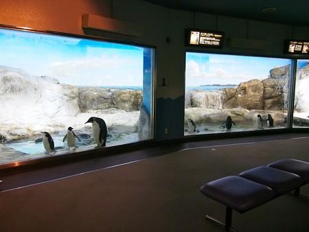 20140502 アドベン 海獣館05