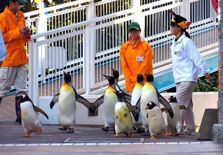 20121207 アドベン ペンギンパレード04