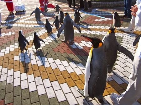 20131207 アドベン ペンギンパレード41
