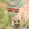 Photos: わ鐵の春
