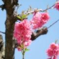 咲 さかと 桃 ないの・・
