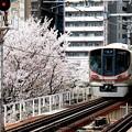 Photos: 追い鉄 追い桜