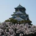 写真: 城の日