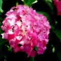写真: 紫飛花