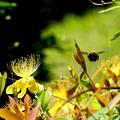 写真: クマバチは飛ぶよ