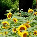 Photos: Sun Dance