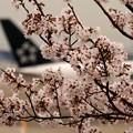 Photos: Spring Alliance