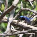 Photos: 青い鳥逃げた