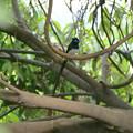 鳥撮りホイホイ