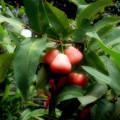 Photos: ベルリンゴ