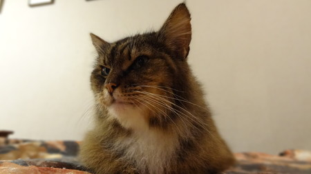 サファリ 猫の館4