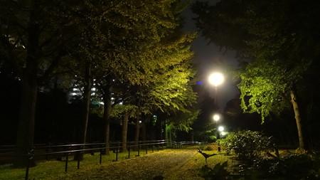 保土ヶ谷公園紅葉1