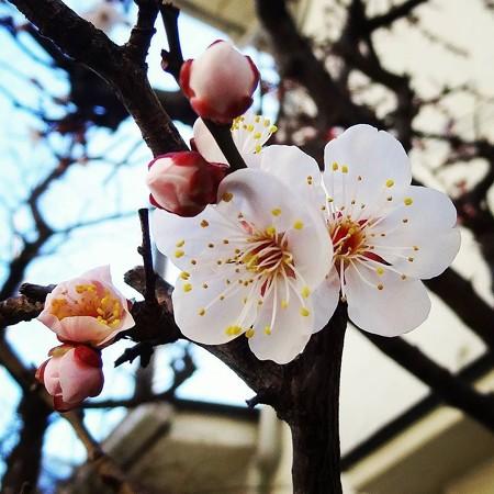 春もう少し(Instagram)