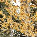 写真: DSC06963 郷土の森梅まつり