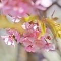 写真: DSC07417~01-01花菜ガーデン