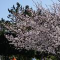 DSC07602八景島春散歩