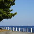 Photos: DSC07644八景島春散歩