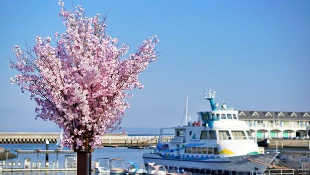 Photos: DSC07661-01八景島春散歩
