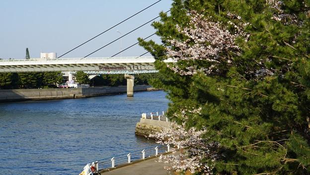 DSC07685八景島春散歩