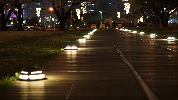 DSC07698みなとみらい夜景散歩春