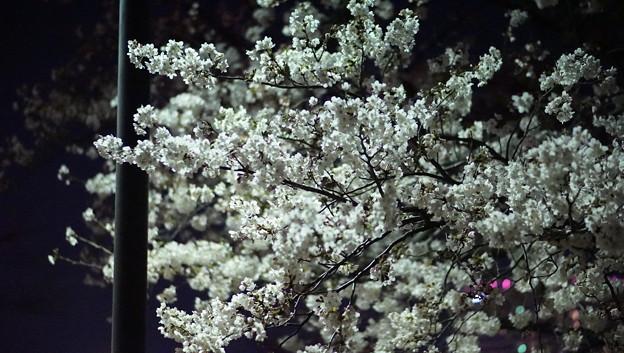 DSC07726みなとみらい夜景散歩春