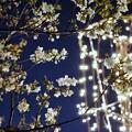 Photos: DSC07733-01みなとみらい夜景散歩春