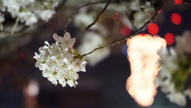 DSC07740みなとみらい夜景散歩春