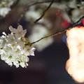 Photos: DSC07740みなとみらい夜景散歩春
