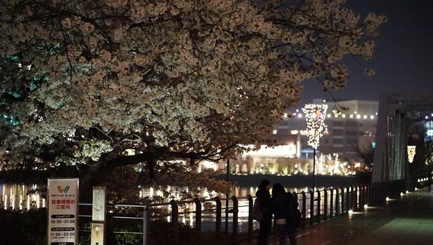 DSC07748みなとみらい夜景散歩春