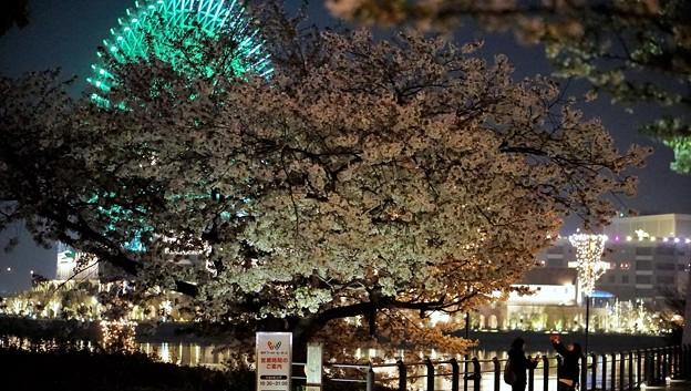 Photos: DSC07749-01みなとみらい夜景散歩春