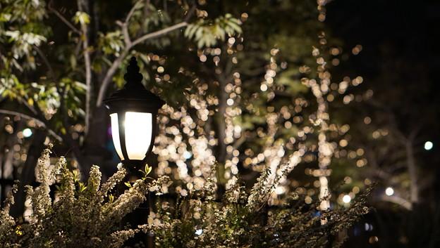DSC07752みなとみらい夜景散歩春