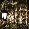 Photos: DSC07752みなとみらい夜景散歩春