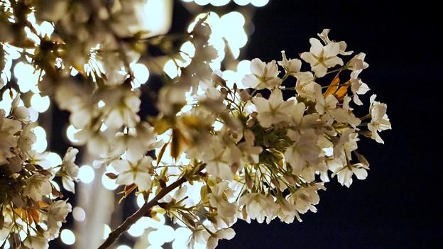 LRG_DSC07738-02みなとみらい夜景散歩春