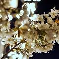 Photos: LRG_DSC07738-02みなとみらい夜景散歩春