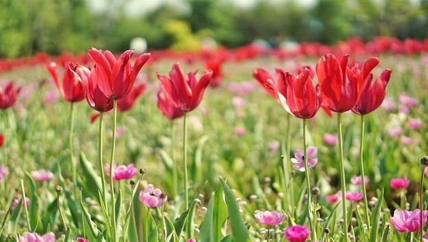DSC08345-01花菜ガーデン