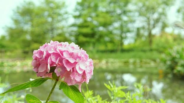 DSC09365-02花菜ガーデン