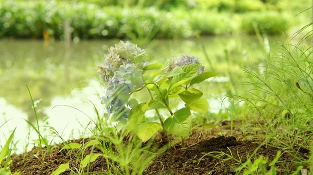 DSC09366-01花菜ガーデン