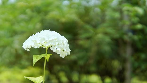 DSC09373-01花菜ガーデン