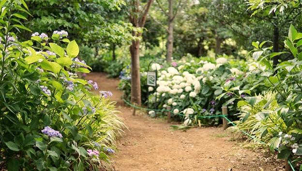 DSC09389-01花菜ガーデン