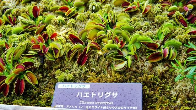箱根湿生花園DSC09965-01