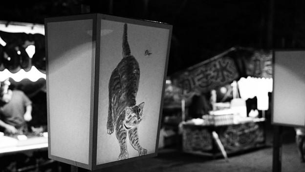 Photos: 鎌倉ぼんぼり祭 猫と雪洞