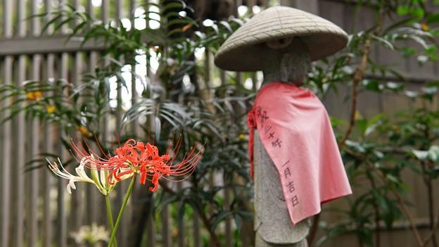 常泉寺(花寺)DSC00678-01